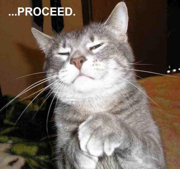 Pompous-Cat